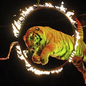 Цирки Навлы