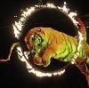 Цирки в Навле