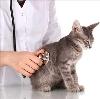 Ветеринарные клиники в Навле